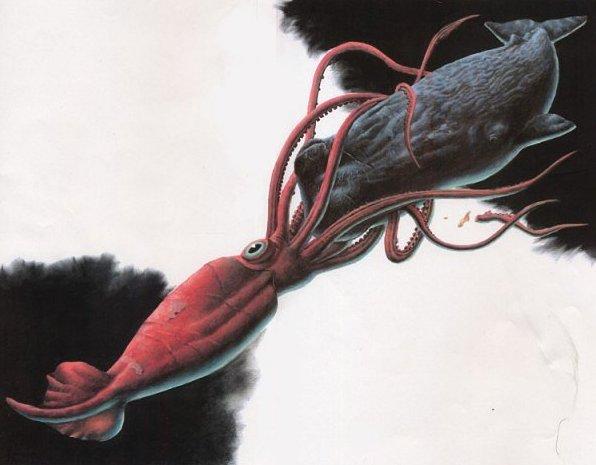 squid[1].jpg